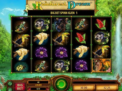 rainforest dream wms slot review