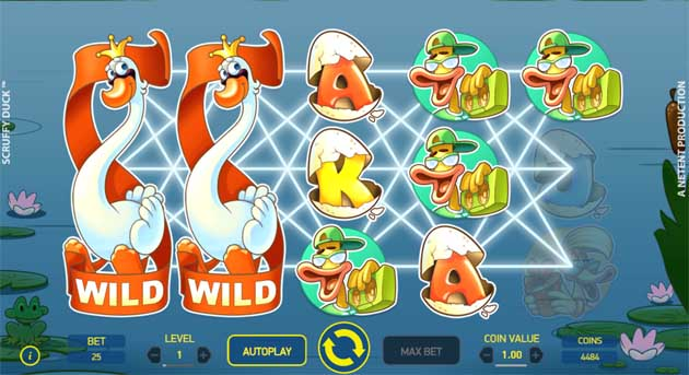scruffy duck online slot from netent